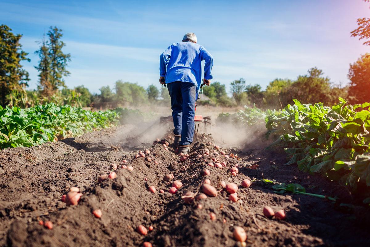 Renting Agricola
